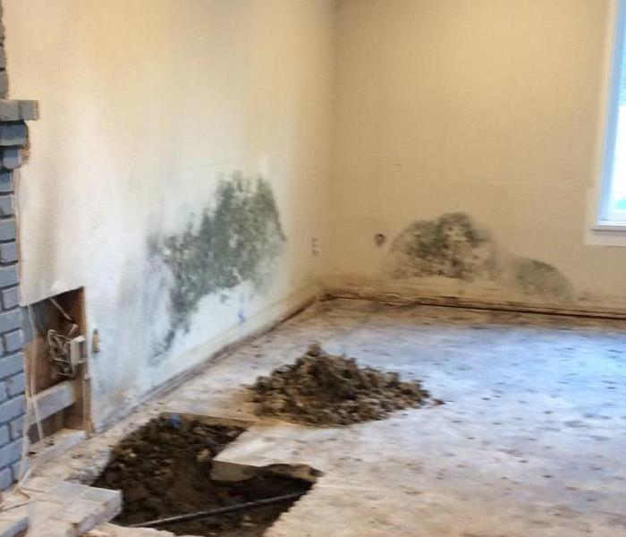 Have Mold? Call SERVPRO 24/7 818-882-4556 or 818-881-3636