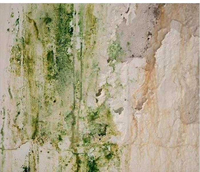 Mold Remediation How you know to trust SERVPRO with your mold problem